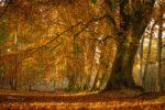 Harlestone Firs, Northamptonshire