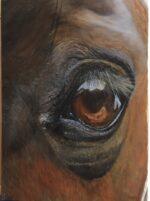 Ziggy oil on canvas 30x40cm