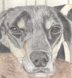 Jacqueline's Pet Portraits